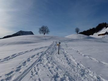 Verzweigung vor der Alp Horn