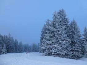 Zwischen Chammhalde und Langälpli.